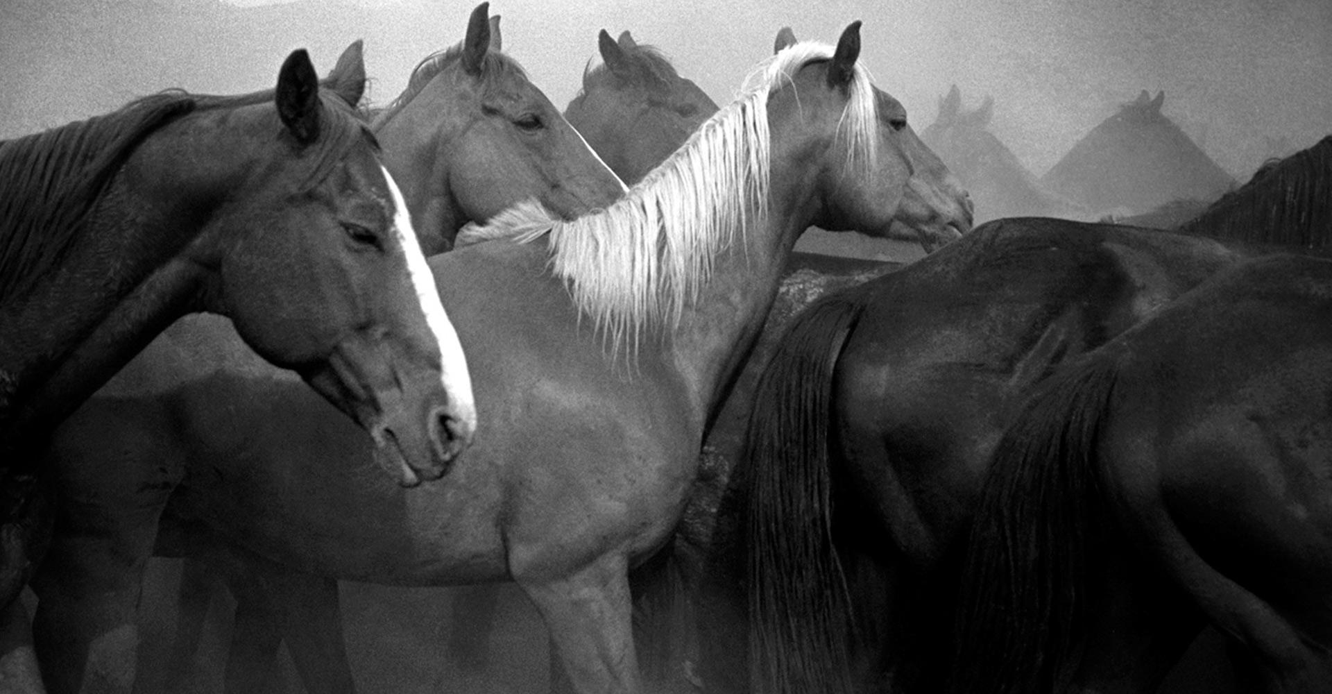 Remuda, Spanish Ranch, NV