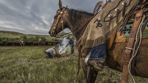 Photo by Jess Lee for Country exhibit