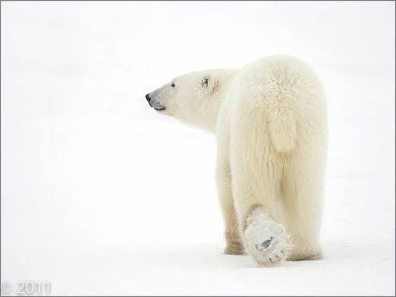 Photo by Matthias Breiter for Extreme Exposure exhibit