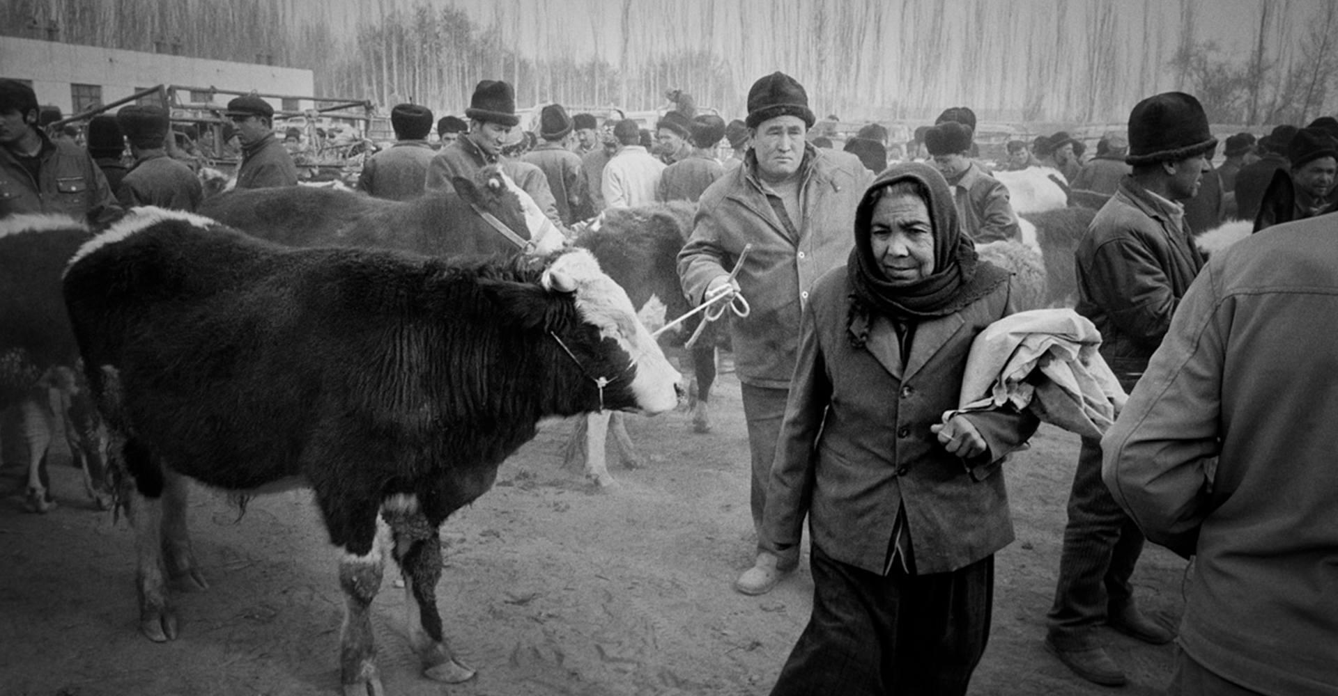 Livestock Market - Kashgar, China