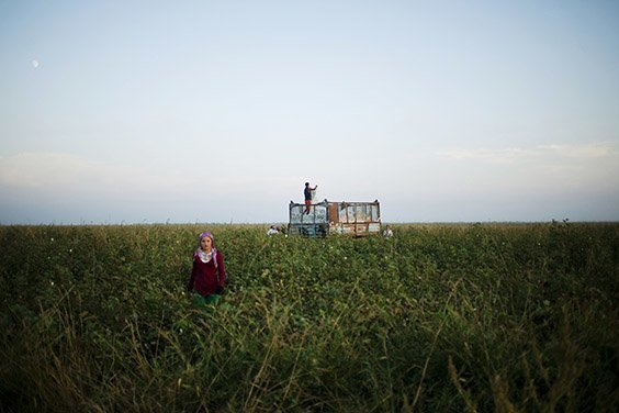 School children pick cotton in Zhetisay, Kazakhstan. The area was sparsely populated before the Soviet government began building towns in order to launch its massive cotton industry, which now spans all the countries in Central Asia. Water funneled from the Syr Darya river to irrigate the fields is one of the reasons for the Aral Sea's depletion.
