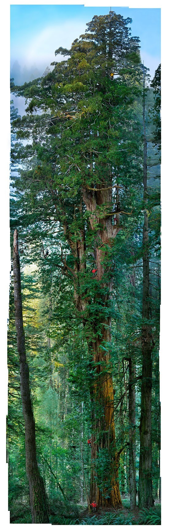 This 300‐foot redwood is roughly 1,500 years old and has the most complex crown structure scientists have ever mapped. A team of seven photographers collaborated with Nichols over 19 days; in one magic hour, they created this composite image of 84 individual images, which took 120 hours to stitch together.