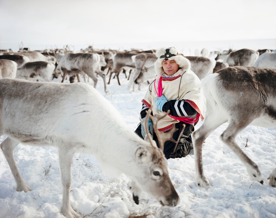 Sami, The People That Walk With Reindeer - Reindeer can spook suddenly, so Nils Peder kneels calmly in the midst of the herd on which his livelihood depends. He holds a lasso color-coded to indicate the temperature and season in which it works best. As he watches the animals, Nils Peder is yoiking, chanting a throaty, traditional Sami song evoking his wife, Ingrid. The Lutheran pastors who converted the Sami forbade yoiking, calling it devil's music. Nils Peder learned it from his grandparents and has taught it to his children.