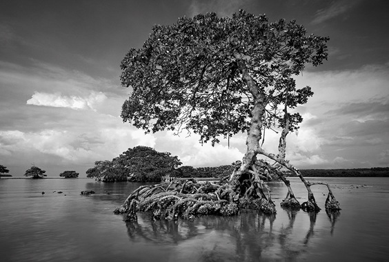 Clyde Butcher: The Everglades in Black and White