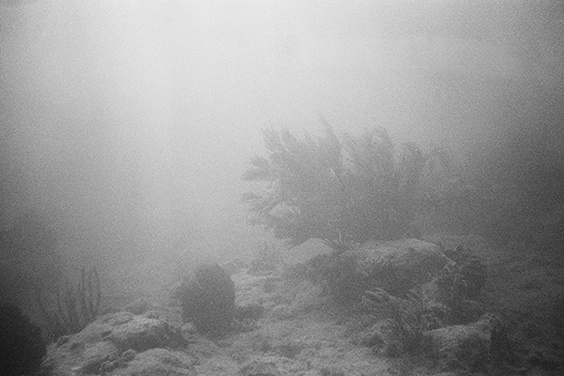 Photo by Emile Dubuisson for Sink or Swim exhibit