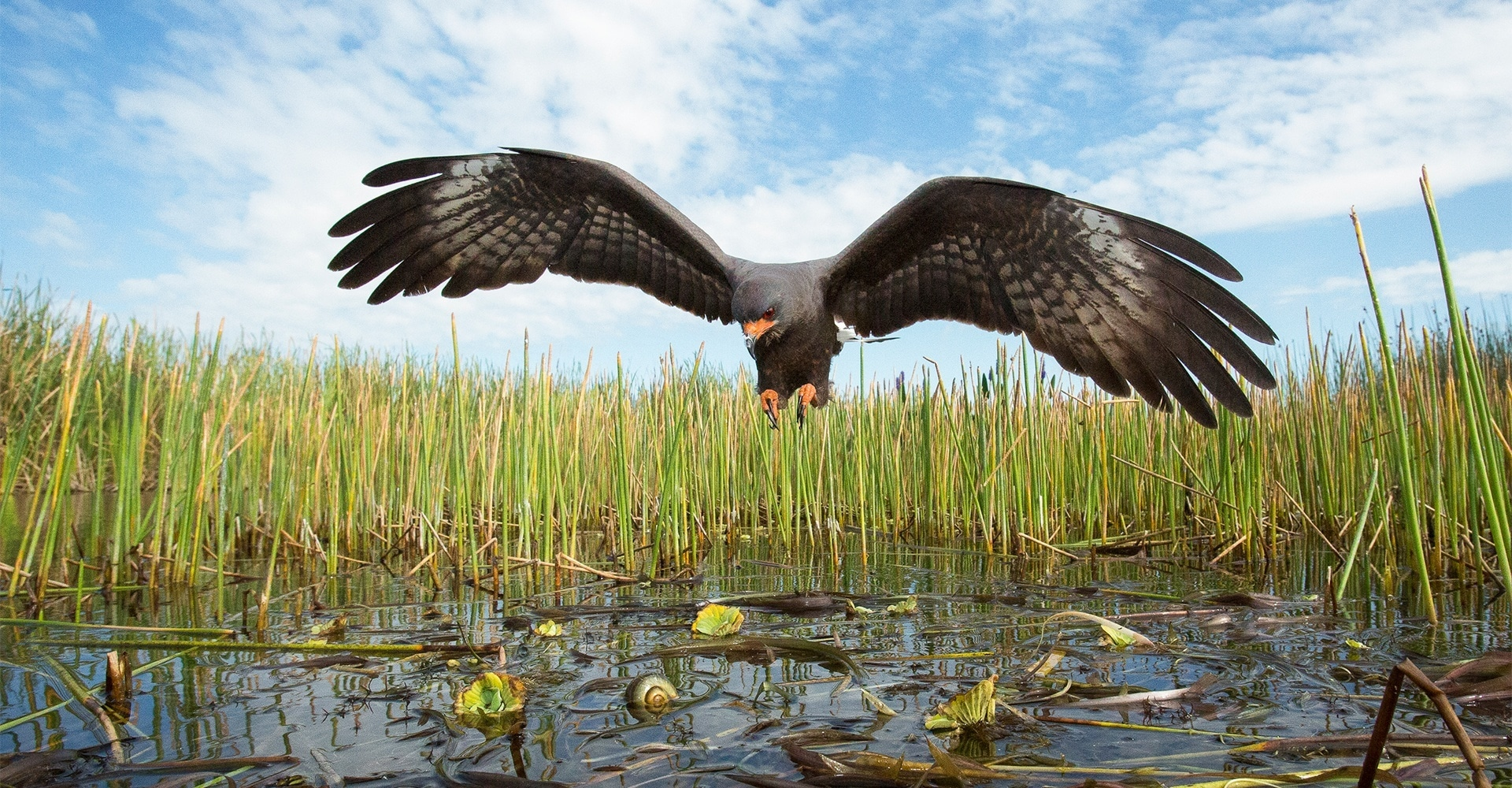 Mac Stone: Everglades
