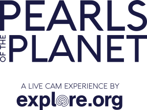 Pearls Of The Planet: A Live Cam Experience By Explore.org