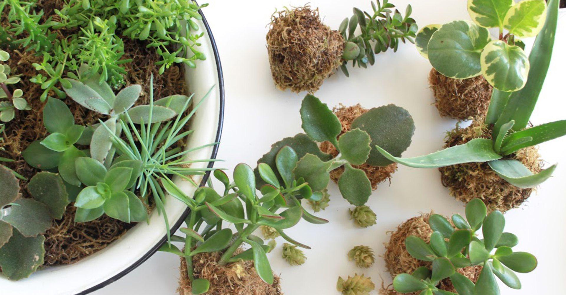 Botanical Photography Workshop with La Fleur Kitchen