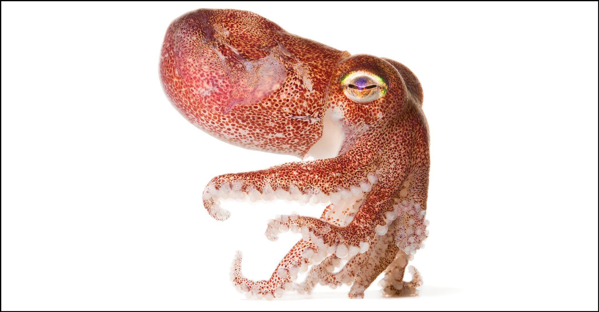 Spineless: Portraits of Marine Invertebrates, The Backbone of Life