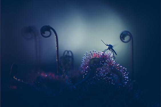 Photo by Joni Niemelä for LIFE exhibit