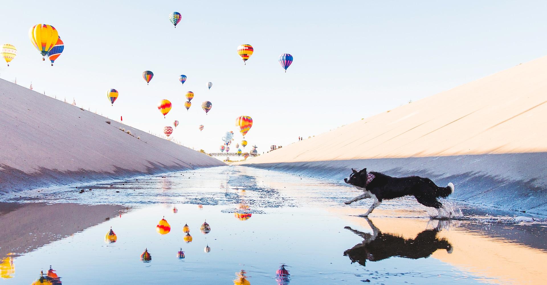 Have Dog, Will Travel – Andrew Knapp & Jordan Kahana